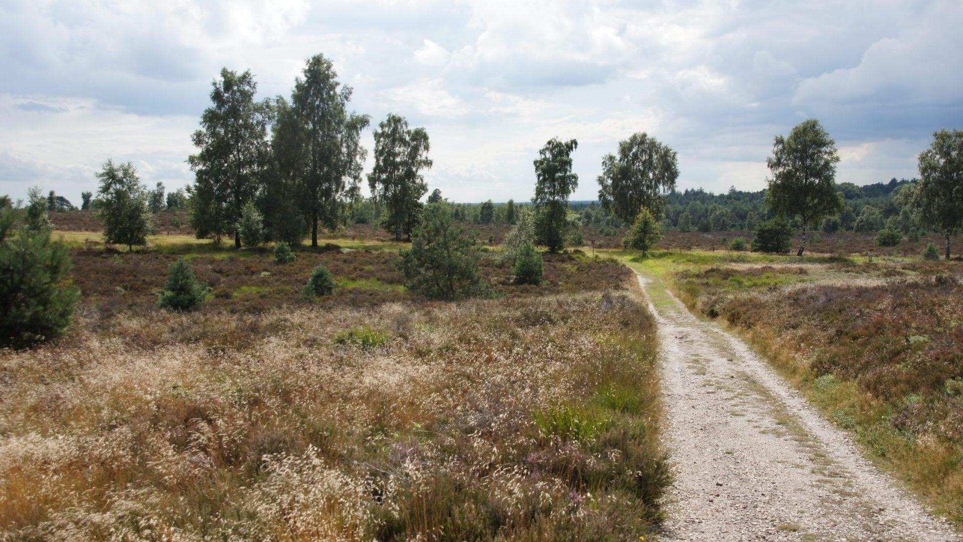 Sallandse heuvelrug - heide natuur